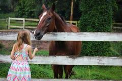 Het voedende paard van het meisje Stock Afbeelding