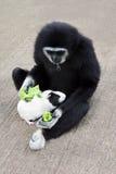 Het voedende proefkonijn van de aap Royalty-vrije Stock Afbeeldingen