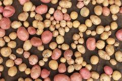 Het voedsel van aardappelsrauwe groenten bij het ontslaan voor patroontextuur en achtergrond Stock Afbeeldingen