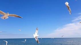 Het voedsel van de zeemeeuwenvangst tegen de hemel van een langzame motie stock video