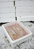 Het voedsel van vissen in doos Stock Fotografie