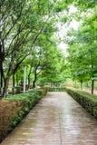 Het voetpad langs de Yangtze-rivier royalty-vrije stock foto's