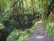Het voetpad met ingang aan de donkere die tunnel door mos wordt behandeld en de weelderige vegetatie op wandelingssleep Janela do stock foto