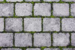 Het voetpad van de steen met mos stock foto's