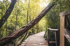 Het voetpad van Senderogr Tepual bij het Nationale Park van Chiloe - Chiloe-Eiland, Chili stock afbeeldingen