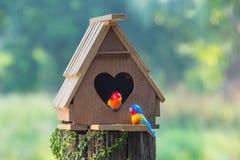 Het vogelhuis heeft een hart-vormige ingang en twee een liefde vogel gemaakt Fr Stock Afbeeldingen