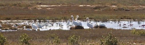 Het Vogelreservaat van het moerasland stock foto's