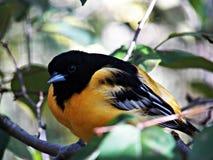 Het Vogelreservaat van Ohio in Mansfield, Ohio Stock Foto