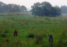 Het Vogelreservaat van Sultanpur (7/9) royalty-vrije stock fotografie