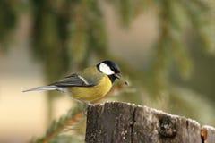 Het vogeltje heeft het voedsel gelaten vallen Stock Fotografie