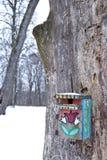 Het vogelzaad van de winter op de geschilderde nestelen-doos Stock Afbeeldingen