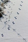 Het volgen van de sneeuw Stock Afbeelding