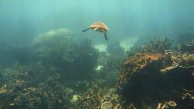 Het volgen van een zeeschildpad in het overzees stock footage