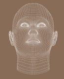 Het volledig-gezicht wireframe geeft jonge vrouw terug Stock Foto
