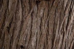 Het volledige kader van de Kinaboomtextuur in aard Sluit omhoog van Californische sequoiaschors stock afbeelding