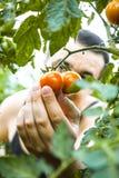 Het voorbereiden van groenten op lijst Vers eigengemaakt voedsel royalty-vrije stock afbeelding