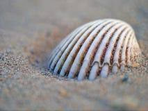 Het voortbouwen op het strand Stock Foto's