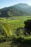 Het vooruitzicht van de Vallei van Hanalei in Kauai, Hawaï Stock Foto's