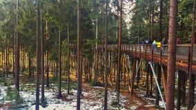 Het Vooruitzicht van Lipno van sleepbomen, Czechia royalty-vrije stock foto's