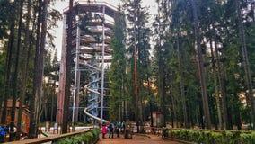 Het Vooruitzicht van Lipno van Sleepbomen, Czechia stock foto's