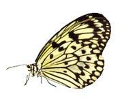Het Voorwerp van de foto - Vlinder Royalty-vrije Stock Fotografie