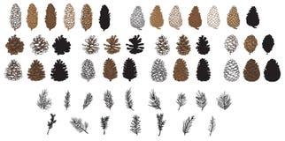 Het voorwerp van de pijnboom Cones vector illustratie
