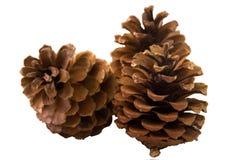 Het voorwerp van de pijnboom Cones Stock Fotografie