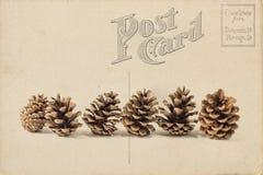 Het voorwerp van de pijnboom Cones Stock Afbeeldingen