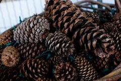 Het voorwerp van de pijnboom Cones Stock Afbeelding