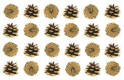Het voorwerp van de pijnboom Cones Royalty-vrije Stock Afbeelding