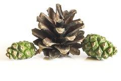 Het voorwerp van de pijnboom Cones Royalty-vrije Stock Foto