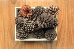 Het voorwerp van de pijnboom Cones Royalty-vrije Stock Afbeeldingen