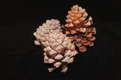 Het voorwerp van de pijnboom Cones Stock Foto's