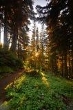 Het vreedzame Bos van het Noordwesten Stock Afbeeldingen