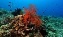 Het vreedzame koraalrif van Indo Stock Afbeelding