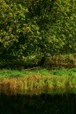 Het vreedzame moerasland van het Noordwesten zoet water Royalty-vrije Stock Foto