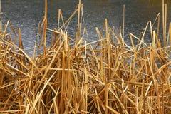 Het vreedzame moerasland van het Noordwesten zoet water Stock Foto's