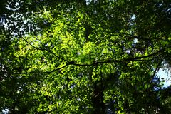Het vreedzame Noordwestenbos en wedijvert esdoornbomen Royalty-vrije Stock Foto's