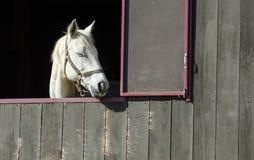 Vreedzaam Paard Stock Foto's