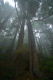 Het vreedzame Regenwoud van het Noordwesten Stock Fotografie