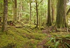Het vreedzame Regenwoud van het Noordwesten Royalty-vrije Stock Foto's