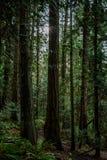 Het vreedzame Regenwoud van het Noordwesten Stock Foto