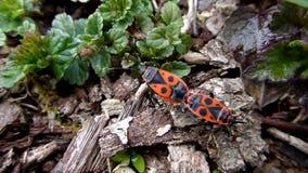 Het vreemde oranje insecten lopen stock footage