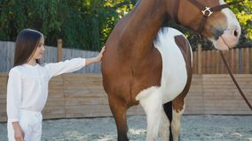 Het vrij jonge meisje komt aan paard en het strelen van het op renbaan stock videobeelden