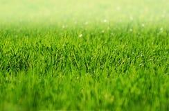 Het vroege Gras van de Ochtend met mist Stock Fotografie