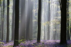Het vroege licht van de ochtend eerste zon in een de lentebos stock afbeeldingen