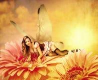 Het vrouwenelf ligt op een de zomerbloem Stock Fotografie