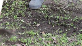 Het vrouwenwerk in de tuin maakt gras van de grond met een zwabber van schoffel schoon stock videobeelden