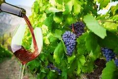 Het vullen van het glas met fijnste wijn stock fotografie