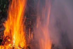 Het vuur van de nacht Stock Afbeeldingen